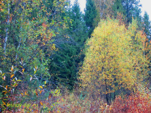 Осенняя палитра северного леса