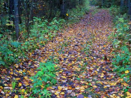 Дорожка в лесу