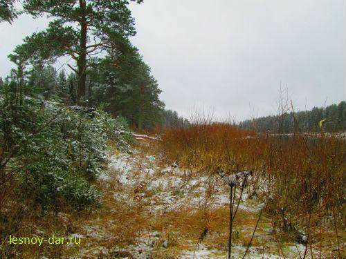 Первый снег. Октябрь