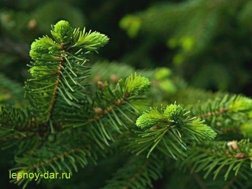 molodyje_pobegi