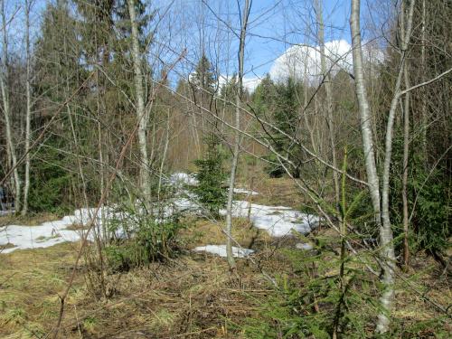 Лес ранней весной