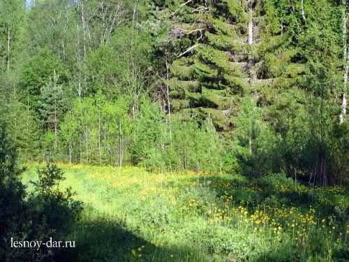 Лес в конце весны