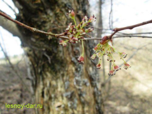 vyaz_gladkij-cvetki